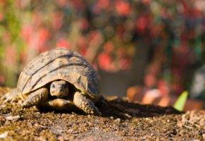 Freigehege - die Schildkröte im Garten