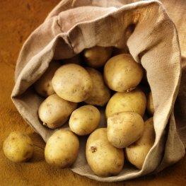 Frische Kartoffeln direkt vom Feld