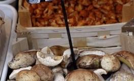Frische Steinpilze beim Gemüsehändler