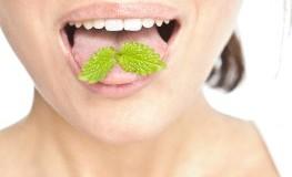 Frische Atem - Kauen von Minzblätter kann helfen