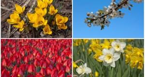 Blumensorten die im Frühjahr blühen.