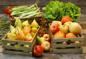 Genussrechtsbeteiligung - jede Woche frisches Gemüse für die Teilhaber