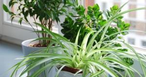 Grünpflanzen für das Wohnzimmer.
