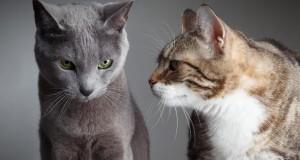 Katzen wissen genau, wie sie ihre Menschen um den Finger wickeln können. Bild: © fotolia.de