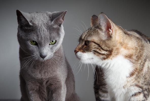 Zwei Katzen sitzend; die eine Katze schaut die andere an