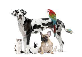 Wohin mit den Haustieren im Urlaub?