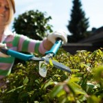 Ran an die Hecke &#8211; so gelingt ein sauberer Heckenschnitt