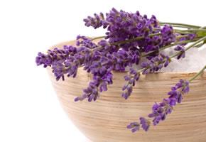 Heilkräuter: Lavendel