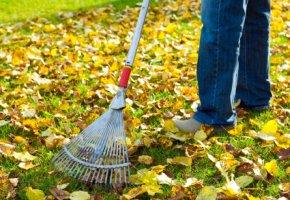 Herbstlaub im Garten zusammenrechen