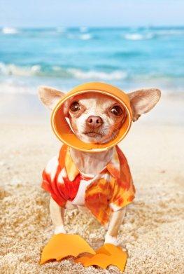 Hundeurlaub: La Spiaggia di Pluto - der Strand für Hunde