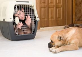 Hundeerziehung: So aber nicht!