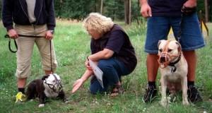 Der Hundeführerschein wird in manchen Bundesländer für Hundehalter zur Pflicht.