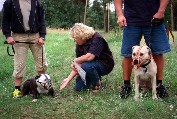 Der Hundeführerschein wird in manchen Bundesländern für Hundehalter zur Pflicht.