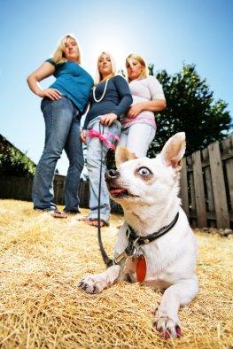 Die Kosten für einen Hundesittter können beim Finanzamt (Steuerermäßigung) geltend gemacht werden