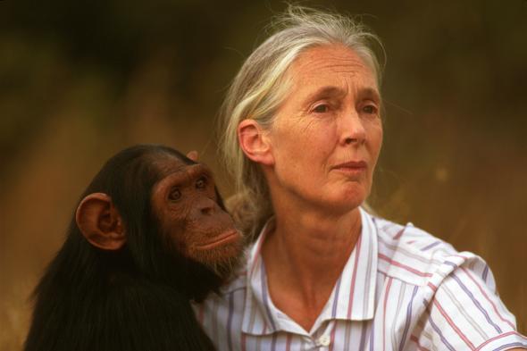 Jane Goodall mit einem kleinen Schimpansen.