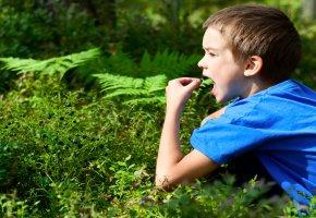 Gefährlich - eine Junge probiert die Blätter einer Pflanze
