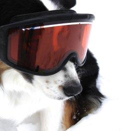 Kälteschutz für den Hund