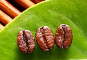 Aromastoffe: Kaffeebohnen aus Äthiopien
