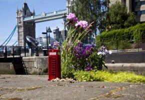 Kaputte Straßen in London - Aus Protest werden die Löcher mit Pflanzen versehen