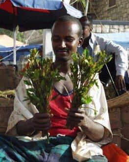 Abessinischer Tee - Khat:  Verkäufer in Burao in Somalia