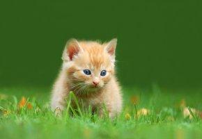 Katzenbaby spielt auf der Wiese