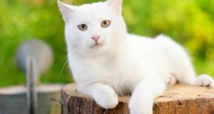 Katzenhaltung - Freigänger-Katze hat es sich im Garten gemütlich gemacht.