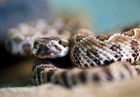 Kein Problem - Schlangengift kann auch über das Internet bestellen