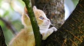 Kleine Katze sitzt im Baum