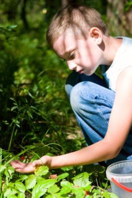 Fuchsbandwurm Gefahr - Kleiner Junge sammelt Waldbeeren