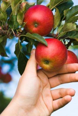 Kostenlos Obst in der freien Natur ernten und pflücken