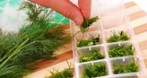 Kräuter kann man ganz einfach im Kühlfach konservieren.