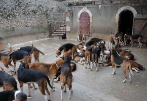 Krankheitsbild Animal Hoarding - Sammeln von Tieren