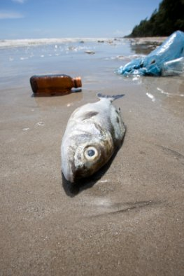 Kunststoff und Plastik gefährden die Weltmeere