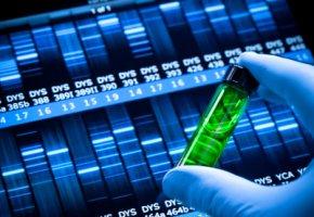 Laboruntersuchung: Die Gen-Diät - DNA-Test