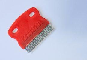 Läusekamm für Nissen und Kopfläuse