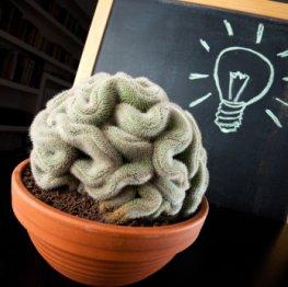 Lerntraining - Gehirnjogging hält das Gehirn auf Trapp