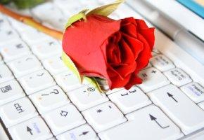 Liebesgeflüster und Schmeichelei sollen Frauen in die Falle locken