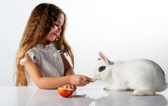Ein Haustier für die ganze Familie: Kaninchen.