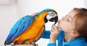 Ein Mädchen mit seinem zahmen Papagei.