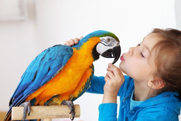 Ein Mädchen mit ihrem zahmen Papagei.