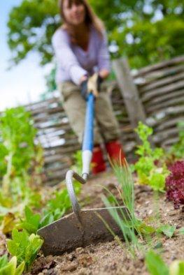 Meine Ernte: Foodies bauen auf einem Leihacker ihr Gemüse an