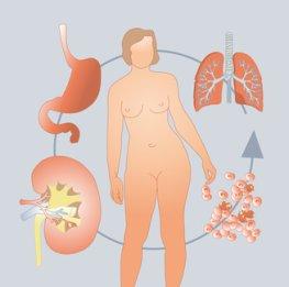 Metabolismus - der Stoffwechel des menschlichen Körpers