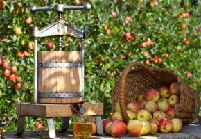 Apfelsaft - mit der Apfelpresse werden die Äpfel zu Apfelmost verarbeitet