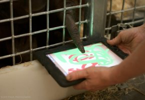 Mahal malt mit dem Finger auf dem iPad