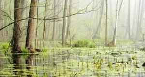 Moorgebiete bestehen hauptsächlich aus Wasser.