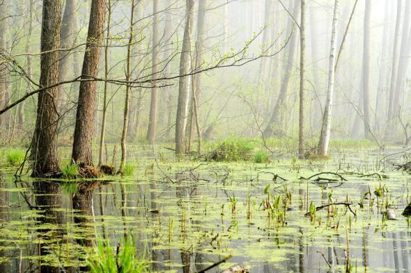 Moorgebiete bestehen zu 95% hauptsächlich aus Wasser.