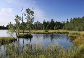 Ein See mitten im Moor