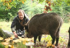 Naturfilmer Jan Haft filmt ein Wildschwein