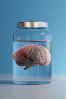 Neuropsychologie - Läsionsstudien:  ein Gehirn in einem Probegefäß
