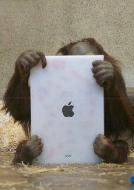 Orang-Utan Mahal mit einem iPad